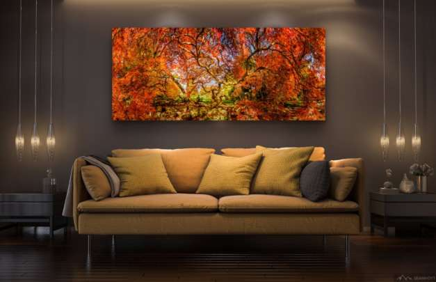 ROOM yellowcouch japanese maple in full color web